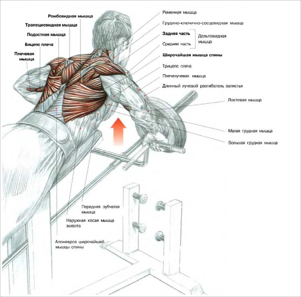 упражнения с картинками мышц естественной
